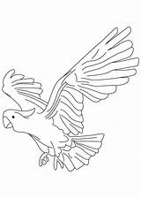 Parrot Coloring Pages Pirate Flying Getcolorings Printable Cockatoo Pittsburgh Hook sketch template