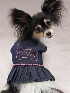 dog fashion accessories