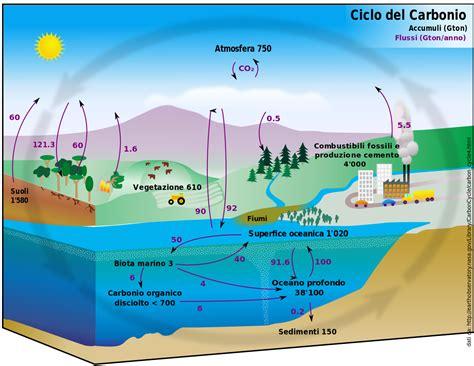 Ciclo Del Carbonio Wikipedia