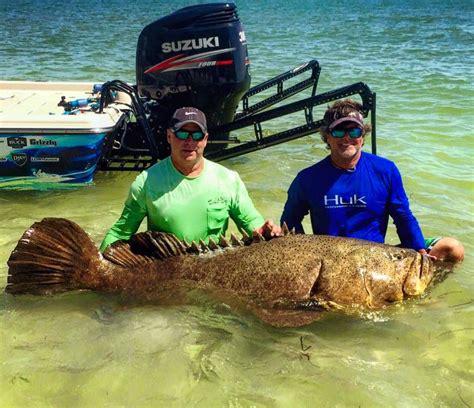 grouper goliath tug war fishing line service pull
