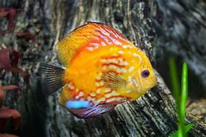 Welche Fische Passen Zusammen Aquarium : amazonas aquarium fische einrichtung und pflege ~ Lizthompson.info Haus und Dekorationen