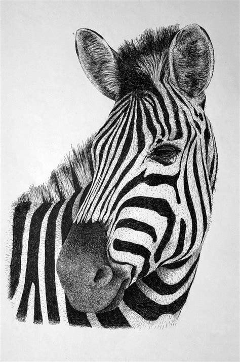 zebra drawing  rens ink