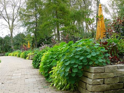beautiful garden trees 9 beautiful edible landscape plants for a garden where form meets function turn to edible