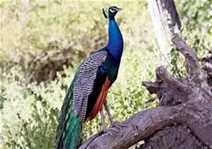 Sanjay Gandhi Bird sanctuary, Sanjay Gandhi National Park ...