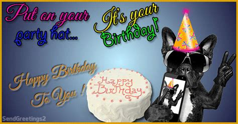 put   birthday party hat  pets ecards greeting