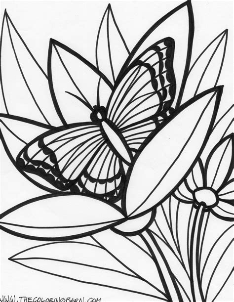 jungle coloring pages coloring pages  jungle animals