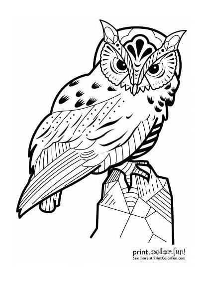 Owl Coloring Decorative Astonishing Exotic Fun Adults