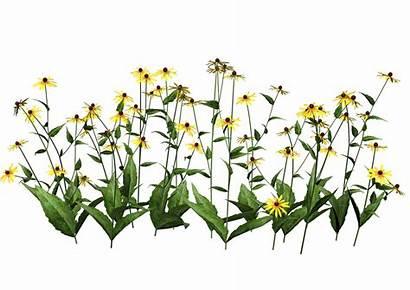 Plants Transparent