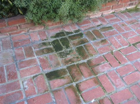 cleaning how do i remove moss from an outdoor brick