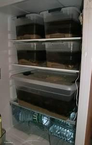 Kühlschrank Temperatur Zu Hoch : graptemys berwinterung im k hlschrank von h ckerschildkr ten ~ Yasmunasinghe.com Haus und Dekorationen