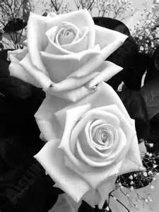 roses « Aisling Jennings Photography