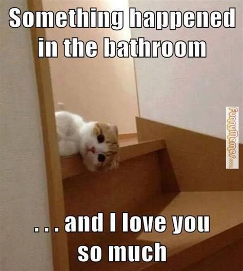 Funny Bathroom Memes - 25 best images about bathroom memes on pinterest toilets cats and bathroom wall