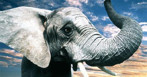 kenya mountains elephant  ultra hd wallpaper high