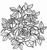 Coloring Roses Rose Pages Printable Nature Flowers Play Both sketch template