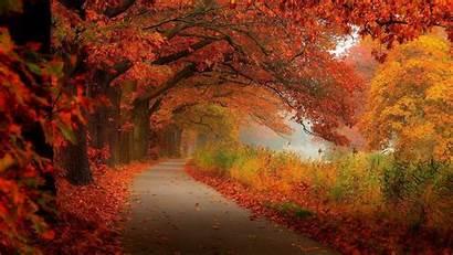 Foliage Autumn Fall Country Desktop Tablet