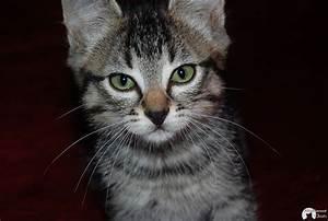 Pourquoi dit-on que le chat a 9 vies