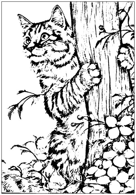 kitten playing   garden cats adult coloring pages
