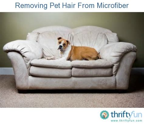how to remove dog hair from sofa removing pet hair from microfiber thriftyfun