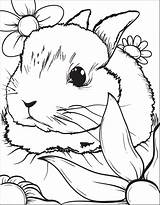 Bunny Coloring Rabbit Printable Flowers sketch template