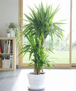 Pot Pour Plante Intérieur : quelle plante pour quelle pi ce de votre int rieur ~ Melissatoandfro.com Idées de Décoration