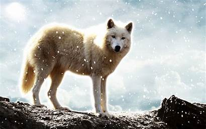 Wolf Wolves Resolution