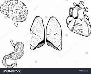 Illustration Brain Heart Stomach Lungs Stock Illustration