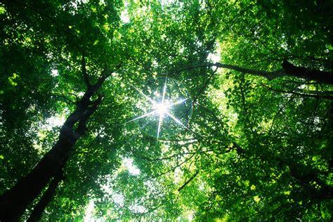 Baum Pflege by Baumpflege Freiburg Formschnitt F 252 R B 228 Ume Pflanzen