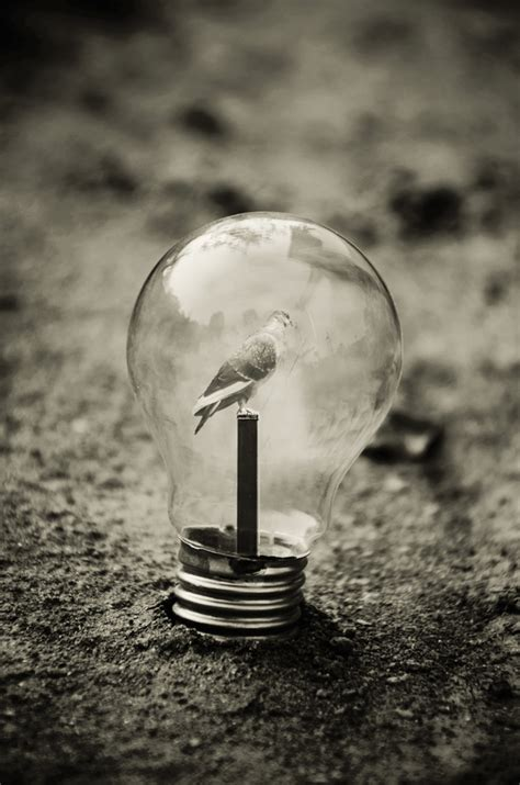 photography light bulbs surreal artifacts of encased in magical light bulbs