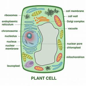 Plant Cell Photograph By Gwen Shockey