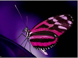 Wallpaper Design: Pink Butterfly Wallpaper