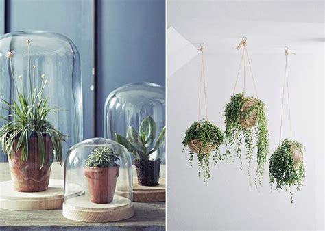 plante cuisine decoration la succulente la plante grasse astuces déco et conseil