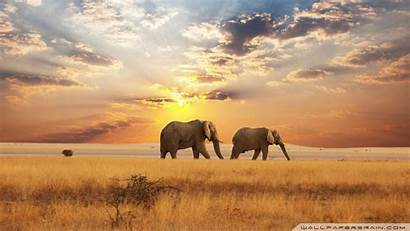 Elephant African Wallpapers Elephants Somepets Animals Sunset