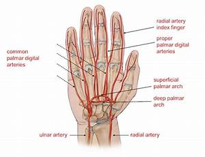 Hand Diagram Ligaments