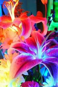 neon flower live wallpaper 3 4 s 307x512 307×461