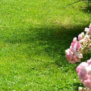 Engrais Gazon Naturel : engrais gazon professionnel sp cial automne sac 25 kg ~ Premium-room.com Idées de Décoration