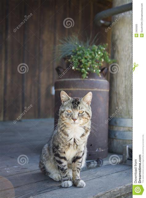 rural cat  porch stock photo image