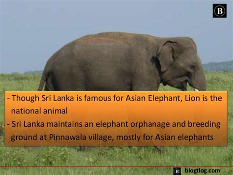 Top 10 Interesting And Amazing Facts About Sri Lanka