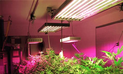 Led Light In Grow Room by Grow Lights Tips And Secrets The