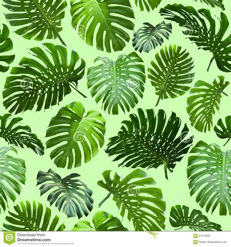 seamless tropical jungle leaves background stock image