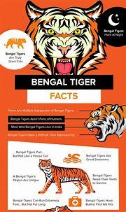 Top 17 Bengal Tiger Facts - Diet, Habitat, Speed & More ...
