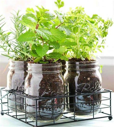 how to make an indoor herb garden how to start an indoor