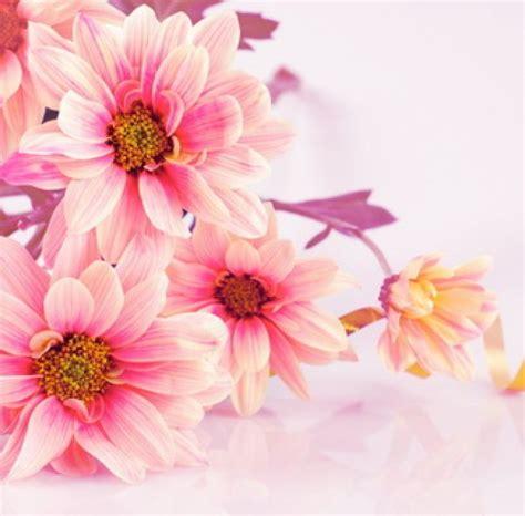 pink flowers flowers wallmural wallmural decor