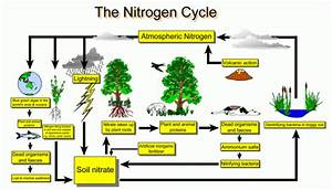 The Role Of Nitrogen In The Garden