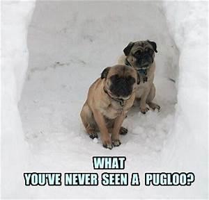 funny pug dog meme pun funny pug dog memes captions