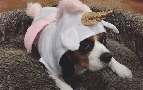 mart   unicorn pet costume    dealing