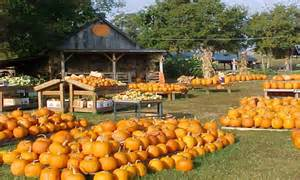 Free Pumpkin Patch Nashville by Blog Archives Blogsbux