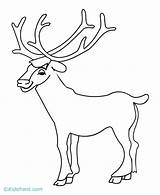 Elk Coloring Bull Pages Drawing Head Simple Printable Sketch Horns Getdrawings Getcolorings Library Clipart Popular Template sketch template