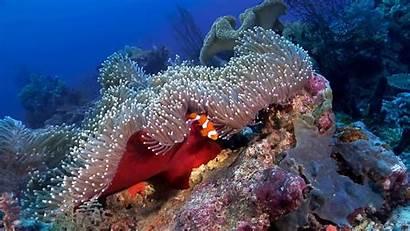 Ocean Scenes Nature Aquarium Underwater Dvd Scenery