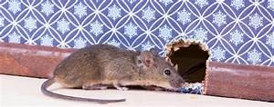Mäuse Bekämpfen Haus : l assurance couvre t elle la nuisance des rongeurs ~ Michelbontemps.com Haus und Dekorationen