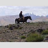 Images Of Land Animals   640 x 480 jpeg 151kB